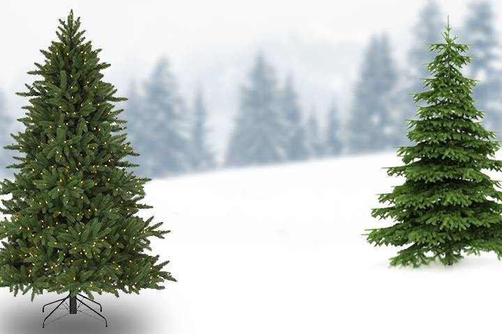christmas-trees-featured2